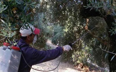 Δολωματικοί ψεκασμοί για την καταπολέμηση του δάκου της ελιάς σε Πτελεό και Αγίους θεοδώρους