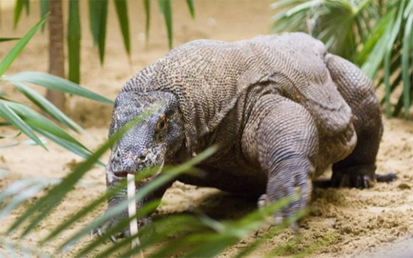 Διεθνής Ένωση Προστασίας της Φύσης: Υπό απειλή το 30% των ειδών που μελετήθηκαν