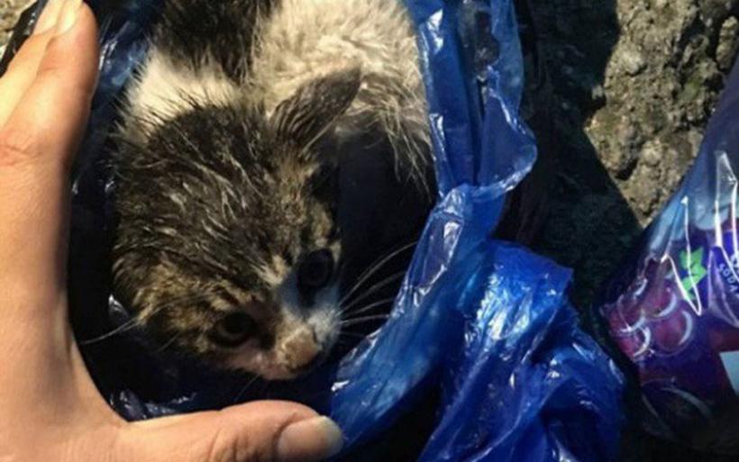 Βόλος: Χειροπέδες και πρόστιμο 30.000 ευρώ σε 88χρονο που πέταξε γάτα στα σκουπίδια